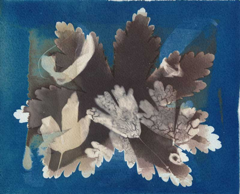 VDB and Cyanotype Leaves