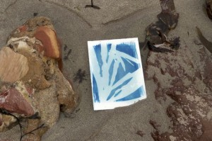 Cyanotype 2 in pool